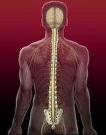 CST_Spine